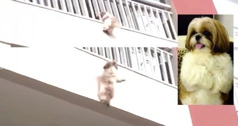 Assustada com fogos, cachorrinha cai de sacada de apartamento e moradores fazem salvamento heroico