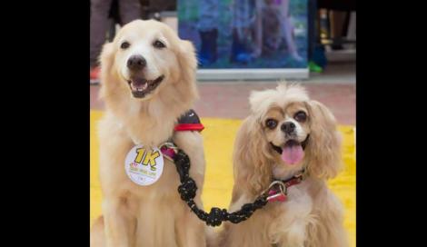 Cachorrinha cega tem sua própria cachorrinha guia
