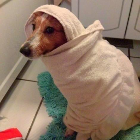 18 fotos hilárias de cães que gostariam de proibir banhos
