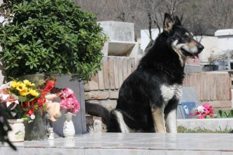 Cachorro passa 11 anos de sua vida visitando tumulo de seu dono