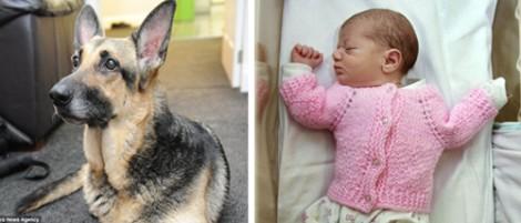 Cadela pastora alemã encontra bebê recém nascido largado no mato