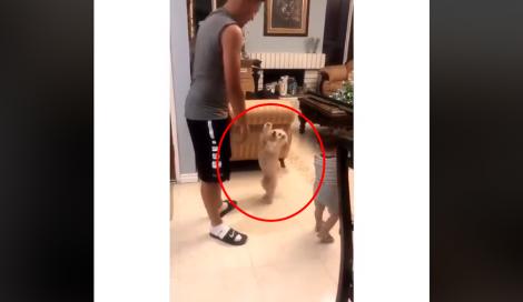 Cachorrinho espera sua vez para ser jogado no ar