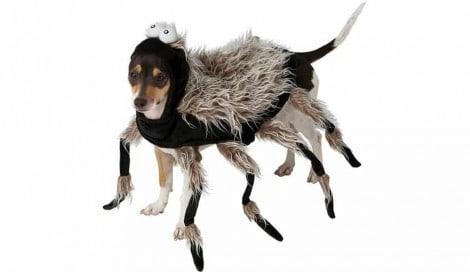8 fantasias de halloween mais engraçadas de 2018 para cães