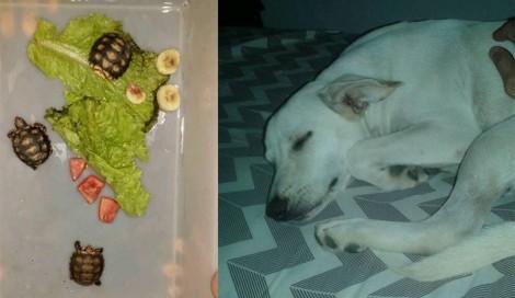 Cão salva família de jabutis no RN e vira sucesso nas redes sociais