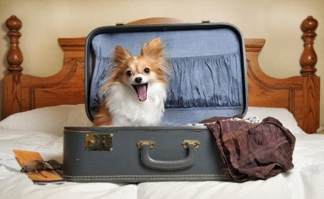 Hotel oferece cães de abrigo para hóspedes adotá-los