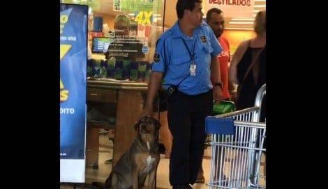 """Relato emocionante de cliente conta o cuidado da loja Prezunic com cão """"comunitário"""""""