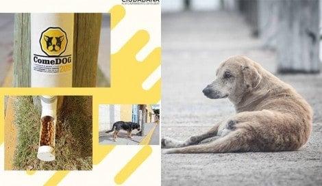 Cidade apresenta programas para melhorar a vida dos cães de rua
