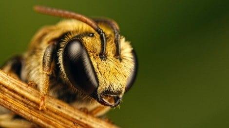 Morte de 400 milhões de abelhas preocupa apicultores do RS