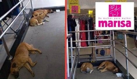 Loja Marisa de Itapevi deixa cães de rua se refrescar dentro da loja e fugir do calor