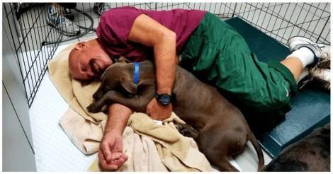 Abrigo americano procura voluntários para abraçar cães