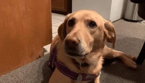 Papai fala a lista de alimentos favoritos de cão e sua reação é a melhor