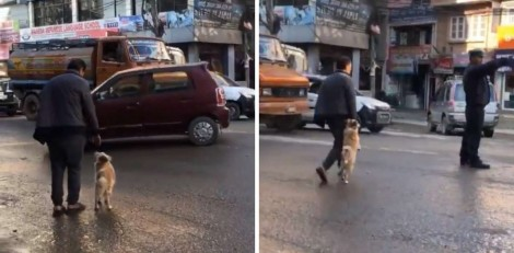 Cãozinho segura a mão de seu dono para atravessar a rua no Nepal