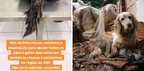 Pet shops oferecem consultas gratuitas a animais que foram vítimas das enchentes em SP