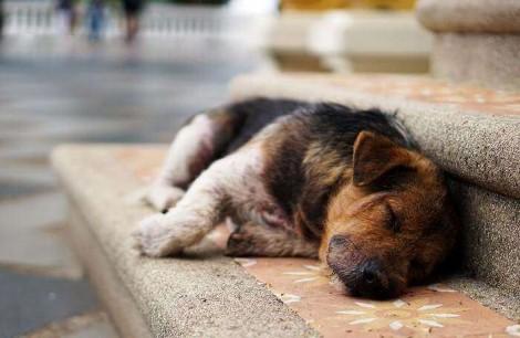 Holanda vira primeiro país sem cachorros abandonados