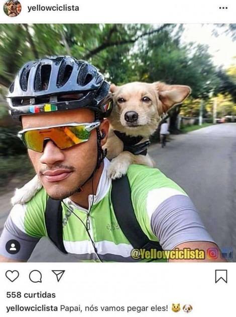 Conheça Yellow, a cadelinha que adora passear de bicicleta