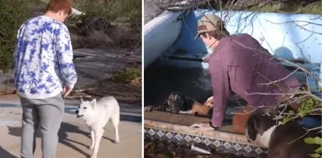 Cachorros abandonados pedem ajuda a jovens para salvar amigo preso