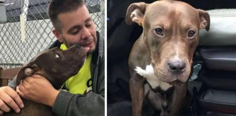 Homem viaja 4500 quilômetros para salvar pitbull de ser sacrificado