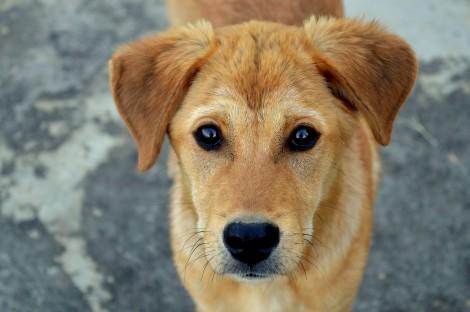 Nova vacina contra Leishmaniose pode imunizar e tratar cães infectados