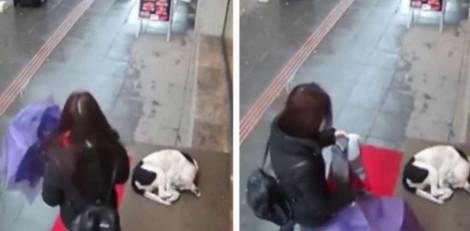 Mulher tira cachecol para esquentar cãozinho que tremia de frio na rua