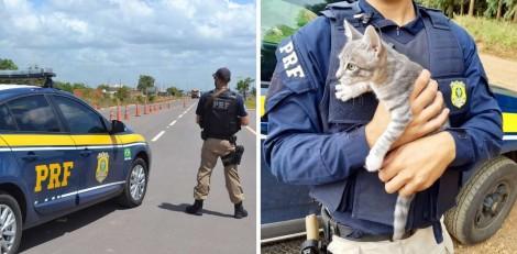 Homem é preso por abandonar gato na beira da BR-116, em Vacaria