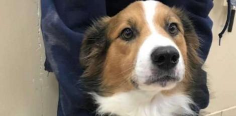 Cachorro de abrigo fica eufórico ao descobrir que ganhou um novo lar