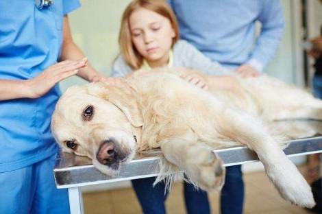 Veterinário revela o que os cães 'procuram' nos seus momentos finais