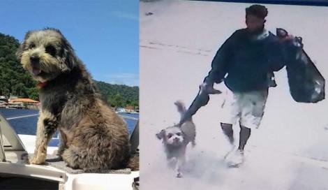 Homem de rua furta cachorro e família está desesperada a procura do animalzinho