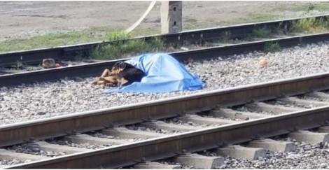 Cachorro se nega a sair de perto de corpo de dono atropelado por trem (veja o vídeo)