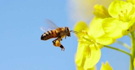 Abelhas são declaradas os seres vivos mais importantes do planeta