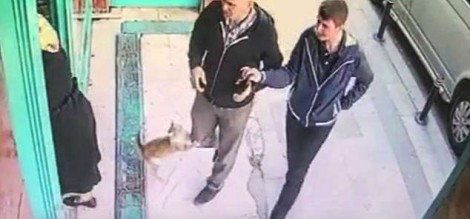 Gata de rua que só ataca homens viraliza nas redes sociais (veja o vídeo)