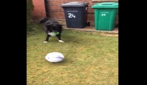 Carteiro só pode entregar cartas nesta casa se jogar futebol com o cão