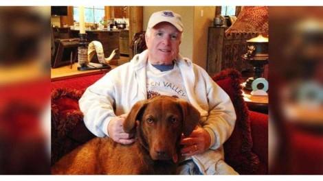 Família fica arrasada após cão morrer em acidente trágico