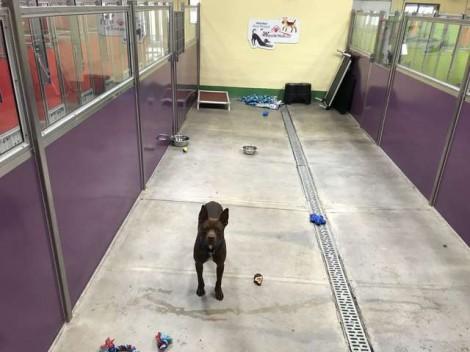 Cão fica sozinho em abrigo depois que todos os outros são adotados