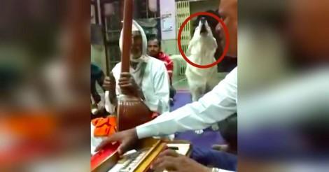 Dog ouve as pessoas cantando e decide se juntar a elas