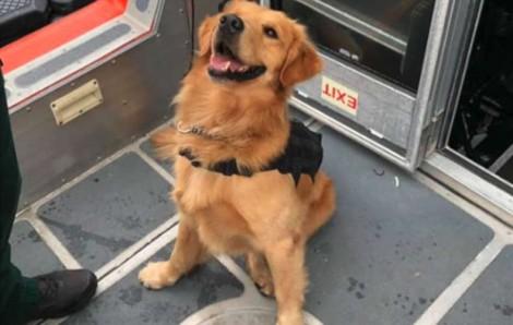 Cão farejador fica drogado com êxtase após operação da polícia
