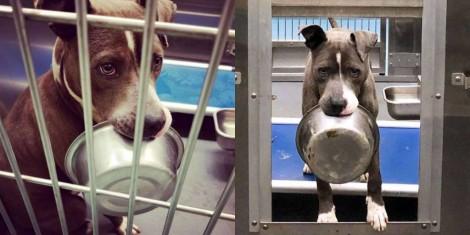 Cão de abrigo se recusa a ser adotado sem sua tigela de comida