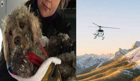 Cão desaparece em montanha e precisou ser resgatado com helicóptero