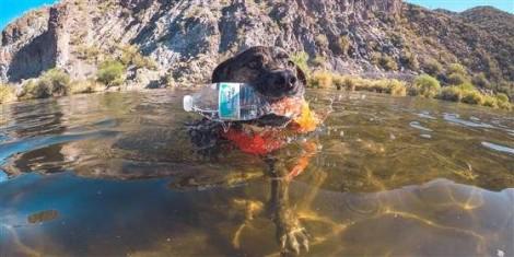 Cão se empenha em retirar lixo do meio ambiente e viraliza na internet