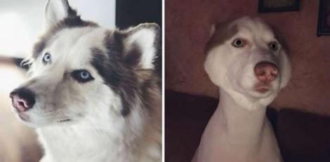 Mãe tenta mudar 'só um pouquinho' visual de cão, mas dá tudo errado