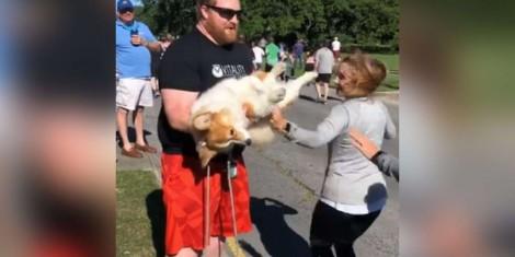 Cão gordinho que assistia a corrida de rua rouba a atenção de atletas que param para acariciá-lo