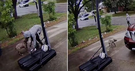 Câmera captura cão tentando desesperadamente seguir mulher que abandonou