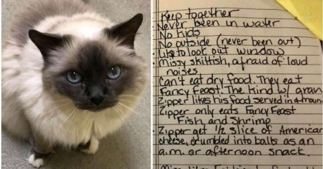 Idosa, que amava muito seus gatos, adoece e deixa bilhete comovente ao doar gatos a abrigo