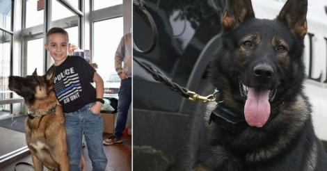Menino arrecada $ 80.000 para comprar coletes à prova de balas para cães da polícia