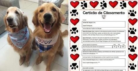 Cachorros famosos na web se casam e cerimônia tem 'certicão de cãosamento'
