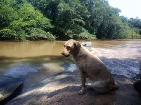 Cachorrinha que trabalhou em tragédia de Brumadinho falece após ter filhotinhos