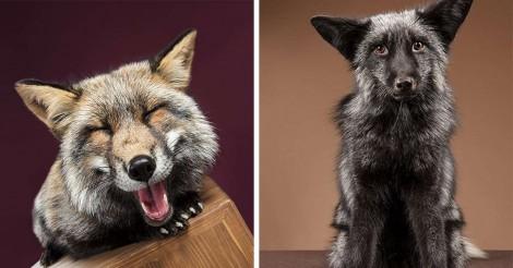 Fotógrafo faz sessão com raposas super fotogênicas e se apaixona por suas personalidades