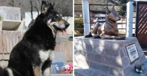Cachorro que protegeu túmulo de dono falecido por 10 anos ganha estátua