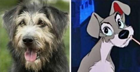 'A Dama e o Vagabundo': Cachorro protagonista de novo filme foi resgatado de abrigo