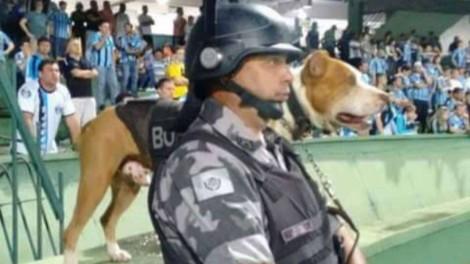 Rock, 1° pitbull da Polícia Militar, falece em Curitiba (PR)