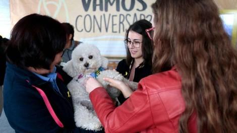 Cachorros ajudam a diminuir estresse de universitários em Curitiba (PR)